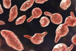 Endometriose pode estar relacionada à bactérias